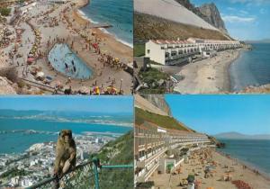 Gibraltar Camp Sandy Bay Rock Ape 4x Postcard s