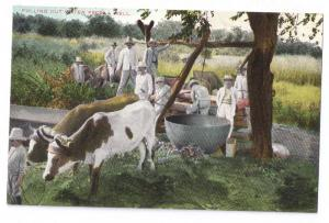 Cuba Pulling Out Water From a Well ca 1910