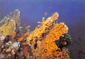 BR88901 fish poisson eilat israel red sea  animal animaux