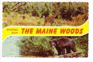 Twoview, Deer, Hunter, Bear, in Maine Woods, Maine Vacationland Lobster on Ba...