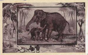Elephant and Baby - Africa Animal - Copyright 1909 M J Mintz of Chicago - DB
