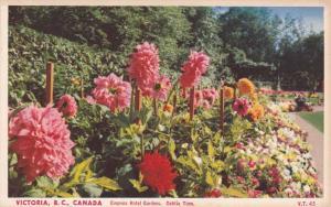 Dahlia Flower Time - Empress Hotel Gardens - Victoria BC British Columbia Canada