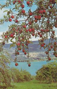 Delicious Red Apples, OKANAGAN VALLEY, British Columbia, Canada, 40-60´s