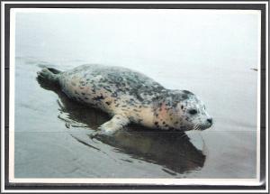 Oregon, Harbor Seal Oregon Picture Print - [OR-016X]