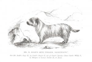 Postcard Mr R. Read's Skye Terrier, Roseneath, The Dog Lovers Collection #121