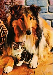 CPM Cat and Collie, CHIEN (716695)
