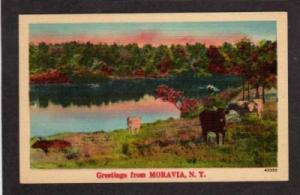 NY Greetings from CRAIGSVILLE NEW YORK Linen Postcard