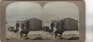 SV : Miner's Cabin & Dog Team , Alaska , 1902