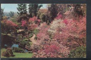 America Postcard - Oriental Gardens, Huntington-Sheraton, Pasadena RS20673