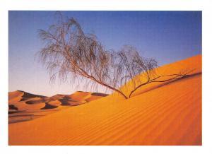 Tree Postcard , Sahara Desert Tree, Algeria U6