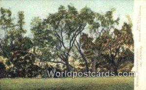Grounds Alexandersfontein Kimberley South Africa Unused