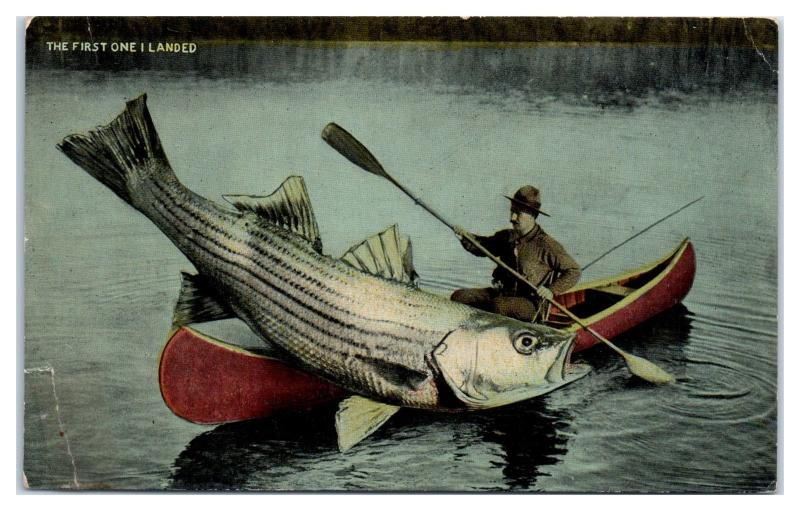 Early 1900s Exaggerated Striped Bass Striper in Canoe Postcard