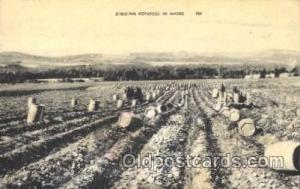 Diging potato Farming, Farm, Farmer, Postcard Postcards in Maine, USA Digging...