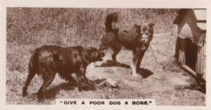 Give A Poor Dog Bone Old German Real Photo Dogs Cigarette Card