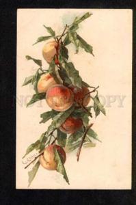 050998 Sweet PEACHES on Tree by C. KLEIN vintage PC