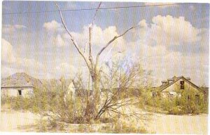 The Hanging Tree used by Judge Roy Bean Langtry Texas TX , Chrome