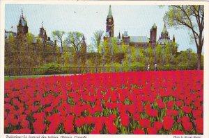 Canada Ontario Ottawa Tuliptime Le Festival Des Tulipes