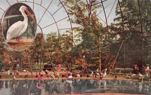 Interior of Flying Cage, New York Zoological Park, Bronx, Early Postcard, Unused