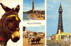 Blackpool Central Beach Promenade Plage Donkey Tower Postcard