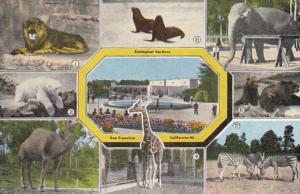 Lion Polar Bear Zebras Camel Elephant Giraffe & Seals Zoological Gardens ...