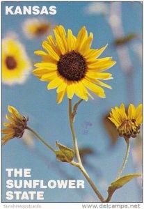 The Native Wild Sunflower Kansas City Missouri