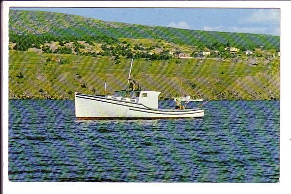 Tuna Boat, Holyrood, Newfoundland