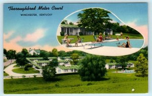 WINCHESTER, Kentucky KY ~ Roadside THOROUGHBRED MOTOR COURT Pool c1960s Postcard