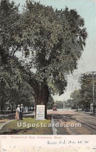 Washington Elm Cambridge MA 1905