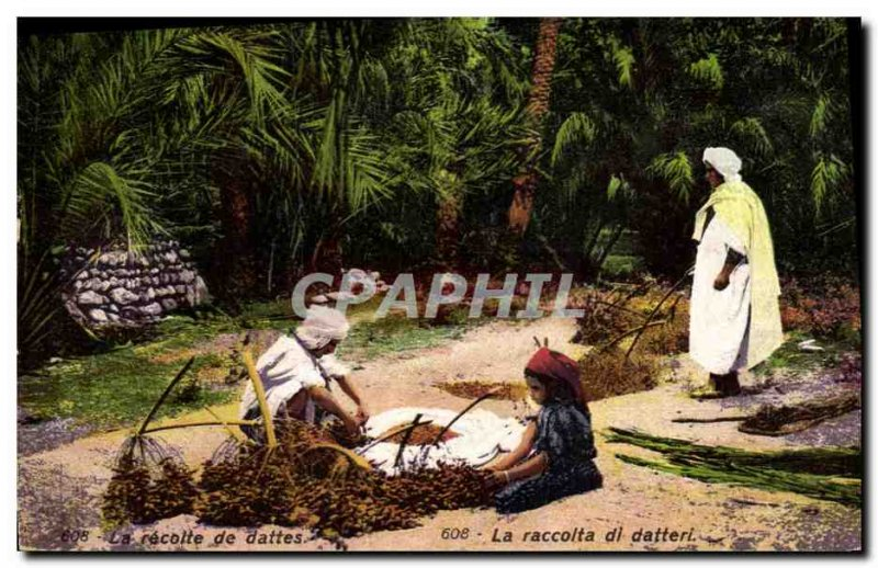 Old Postcard The Palms Palm harvest of dates