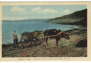 Ox Cart , Belle Anse , Quebec , Canada , 30-40s