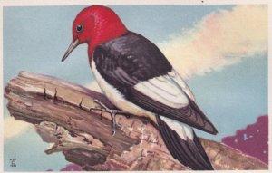 1900-1910's; Red-Headed Woodpecker, National Wildlife Federation, Wildbird Po...