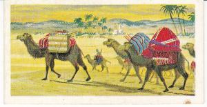 Trade Cards Brooke Bond Tea Transport Through The Ages No 2 The Camel