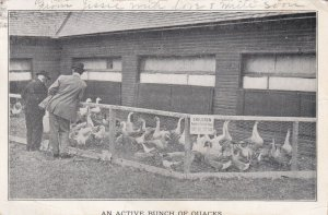 ADDISON COUNTY, Vermont, PU-1912; An Active Bunch Of Quacks, Geese, County Fair