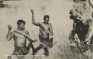 australia, Australian Aborigines Aboriginals, Aboriginees Spearing Fish (1910s)