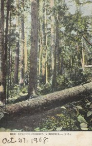 RED SPRUCE FOREST , Virginia, 1910