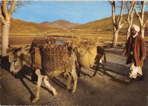 BR49666 Village transportation donkey ane     Afghanistan