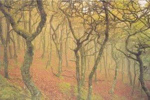 Canolbath Cymru Welsh Oak Woods Spooky Postcard