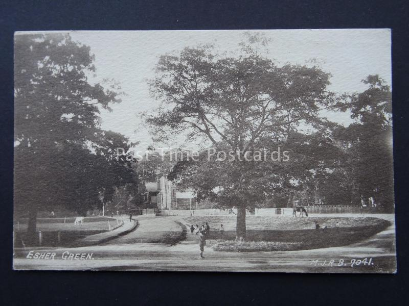 Surrey ESHER GREEN shows Horses & Cattle Grazing c1908 Postcard by M.J.R.B.