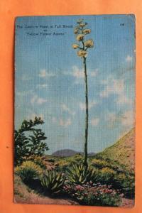 Century Plant Agave Linen Postcard Desert Plant Floral Southwest