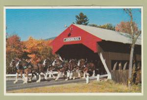 Clydesdale Horses Postcard Jackson Covered Bridge New Hampshire