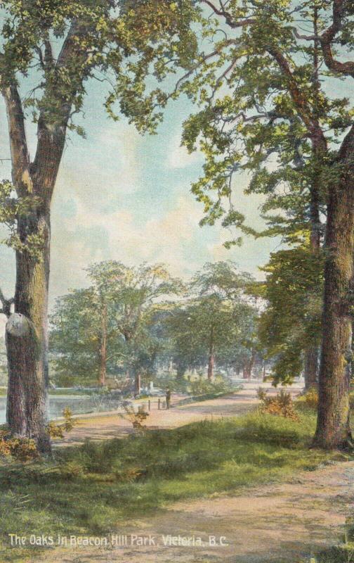 VICTORIA , B.C. , Canada , 1900-10s ; The Oaks in Beacon Hill Park
