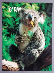 G' Day Greetings from Toolangi, Victoria, Australia Postcard w/Koala