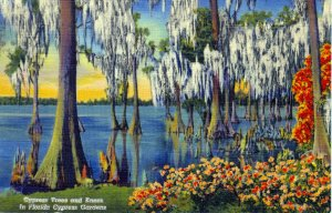[ Linen ] US Florida Cypress Garden - Cypress Trees And Knees