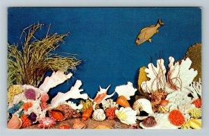Palm Beach FL- Florida, Shells from Douglas, Inc., Treasures, Chrome Postcard