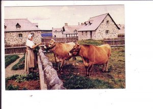 Fortress of Louisbourg, Woman with Cows, Cape Breton, Nova Scotia,