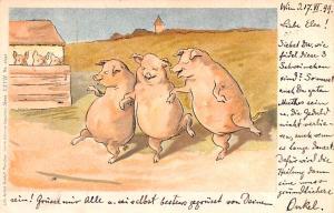 Austria Dancing Pigs  Dancing Pigs