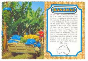 Bananas Industry, Australia, 1970-80s