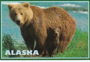 Alaska Alaskan Brown Bear With Cub