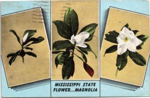 postcard Mississippi State Flower….Magnolia