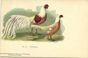 Chicken Hen Rooster, Yokohama (1910s) No. 14